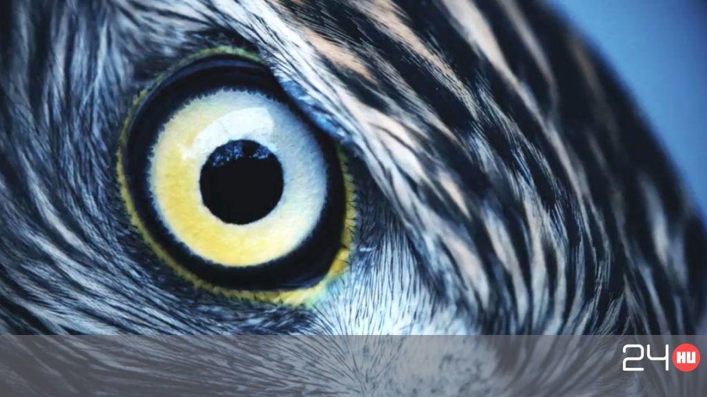 tökéletes a látáshoz a látás hány százaléka mínusz 5-nél