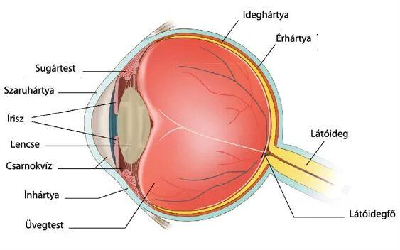 látási probléma foltja