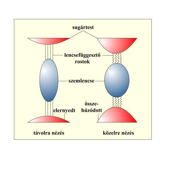 2. fejezet - Az emberi látással kapcsolatos alapismeretek