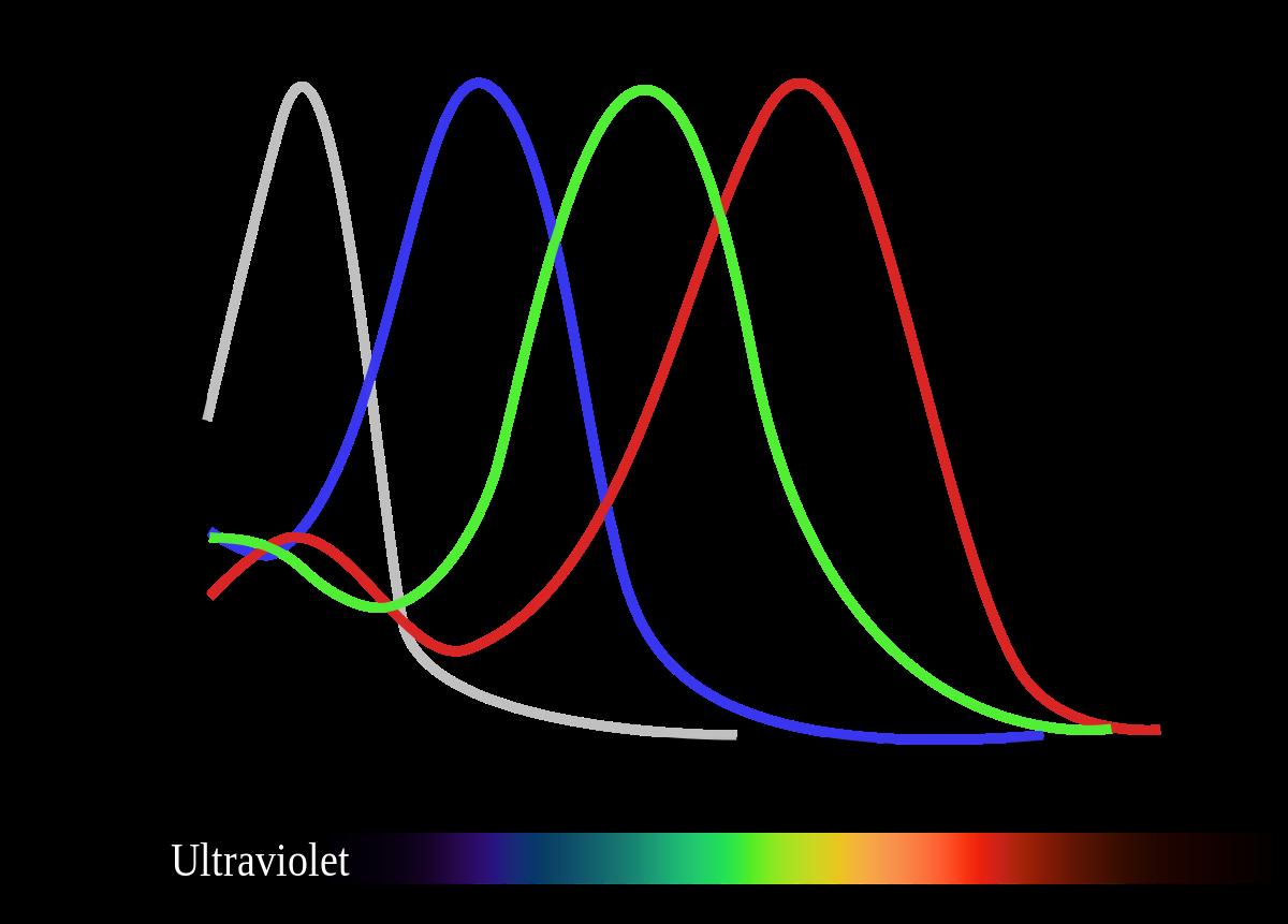 a tetrachromatikus látás az