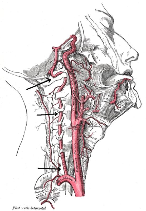Fejfájás és a nyaki gerinc problémái