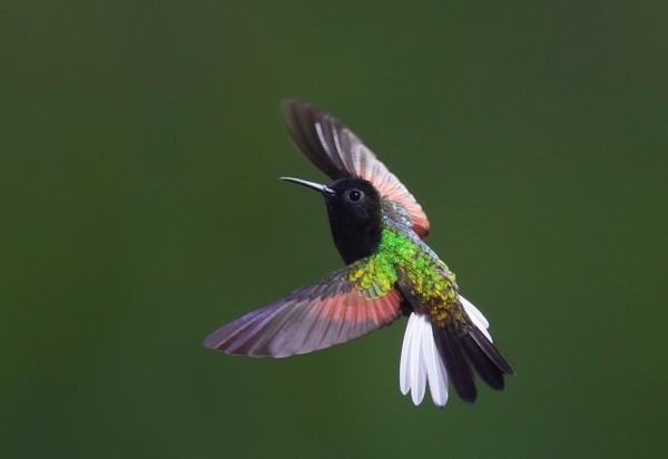 kolibri látás progresszív hyperopia kezelés