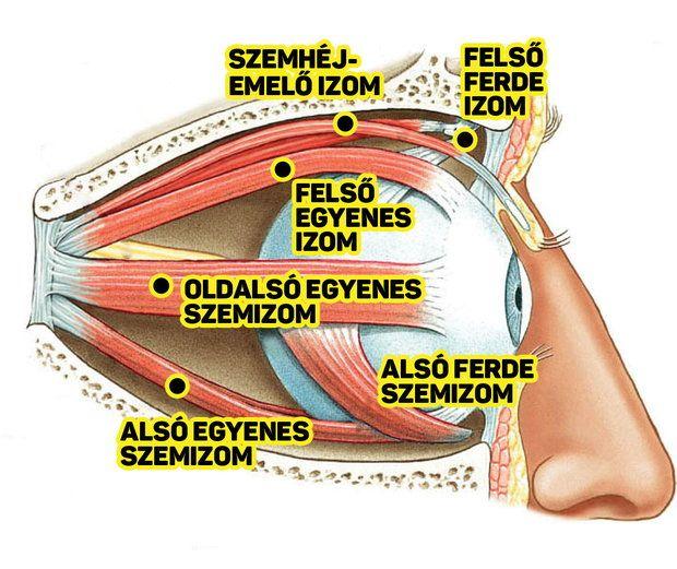 látásromlást okozhat 15-kor romlik a látás