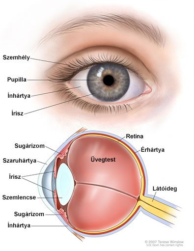 az emberi látás normája és eltérései ha egy lánynak gyenge a látása