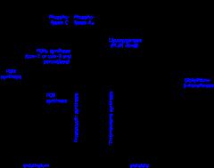 A szem idegpályái – Wikipédia