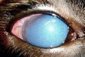 a feltételezett glaukóma diagnosztizálása