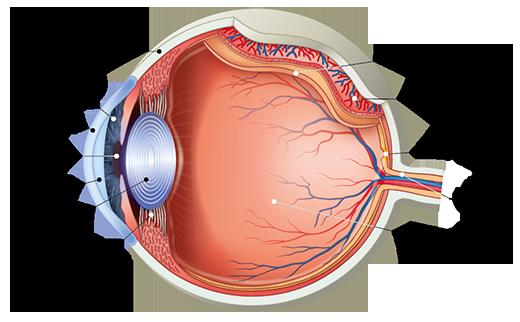 a látás ellenőrzött táblázata
