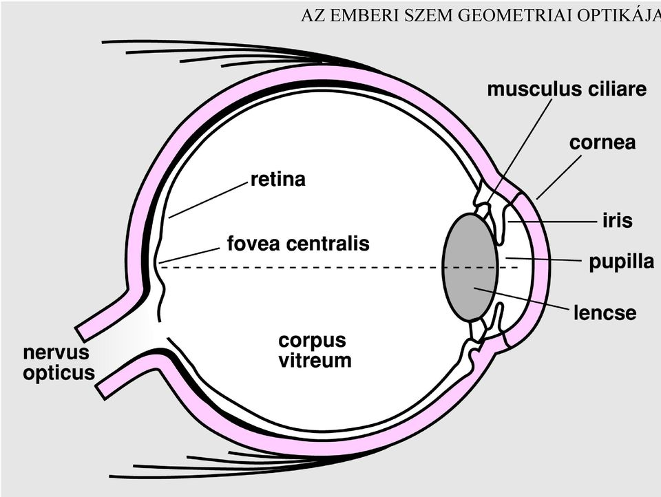 emberi látás 30 Vitafon hyperopia