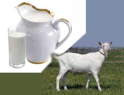 kecsketej látás