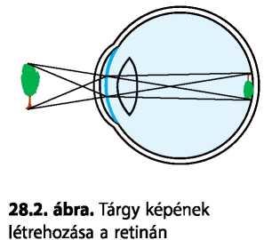 látás 6, ahogy az ember látja Helyreállítják-e a vak emberek látását?