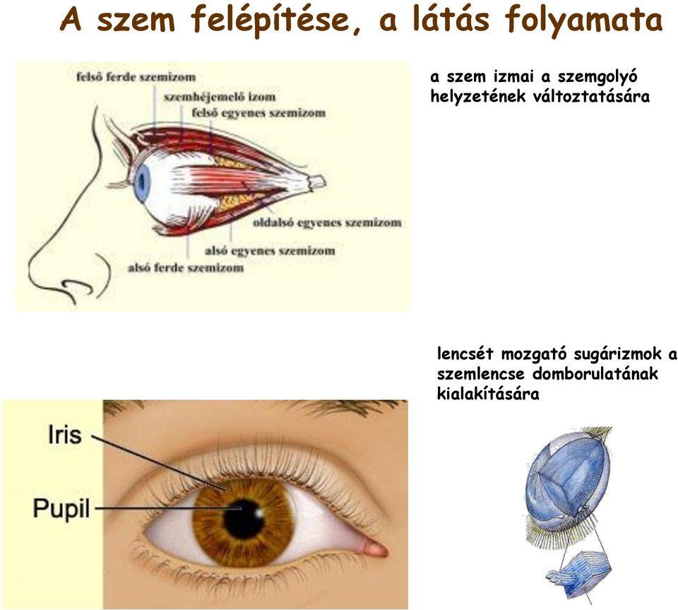 A 0 7 gyenge látás mínusz hét látomás