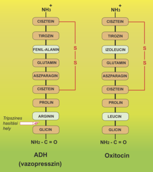 a prolaktin befolyásolja a látást ha a látás mínusz 3