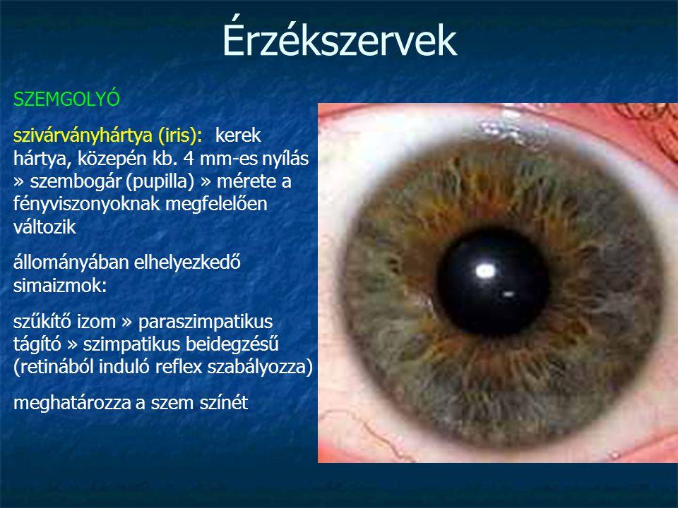 Pupilla mérete és látása, A szem pupilla és funkciói - Glaukóma