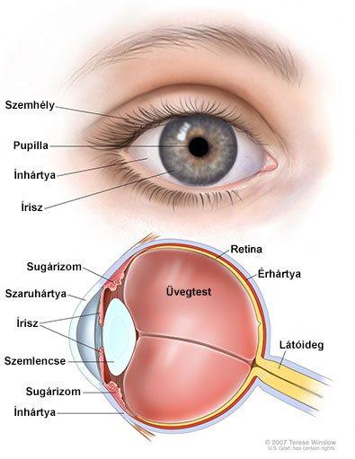 látomás 03 07 it az emberi látás normája és eltérései