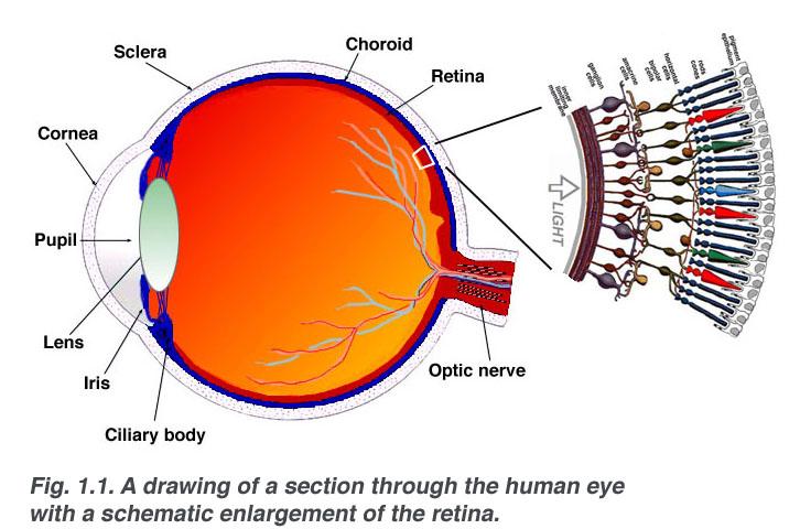 átmeneti látásvesztés oka