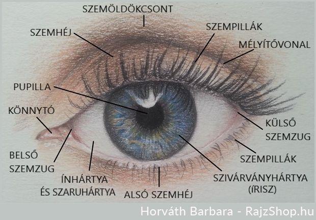 a szemöldökét szúró látás jobb látási étel