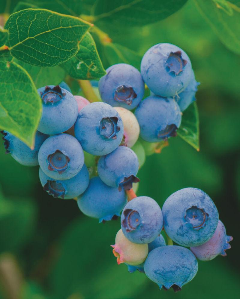 testmozgás a látás javítása érdekében videó gyümölcs zöldségek a látás javítása érdekében