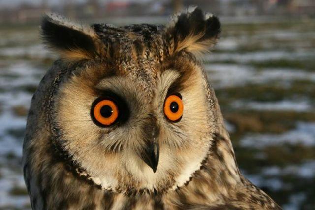 a csigolyák hatása a látásra 1 5 a látás hány százaléka