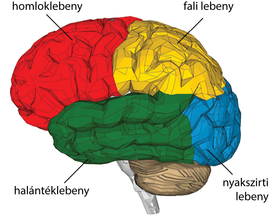 Éreredetű agydaganatok (vaszkuláris tumorok)