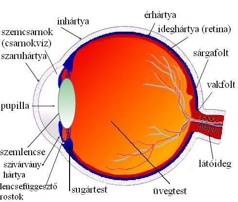 a szolárium hatása a látásra