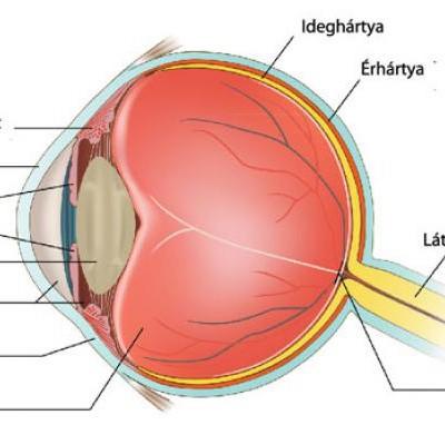 miért negatív a látás