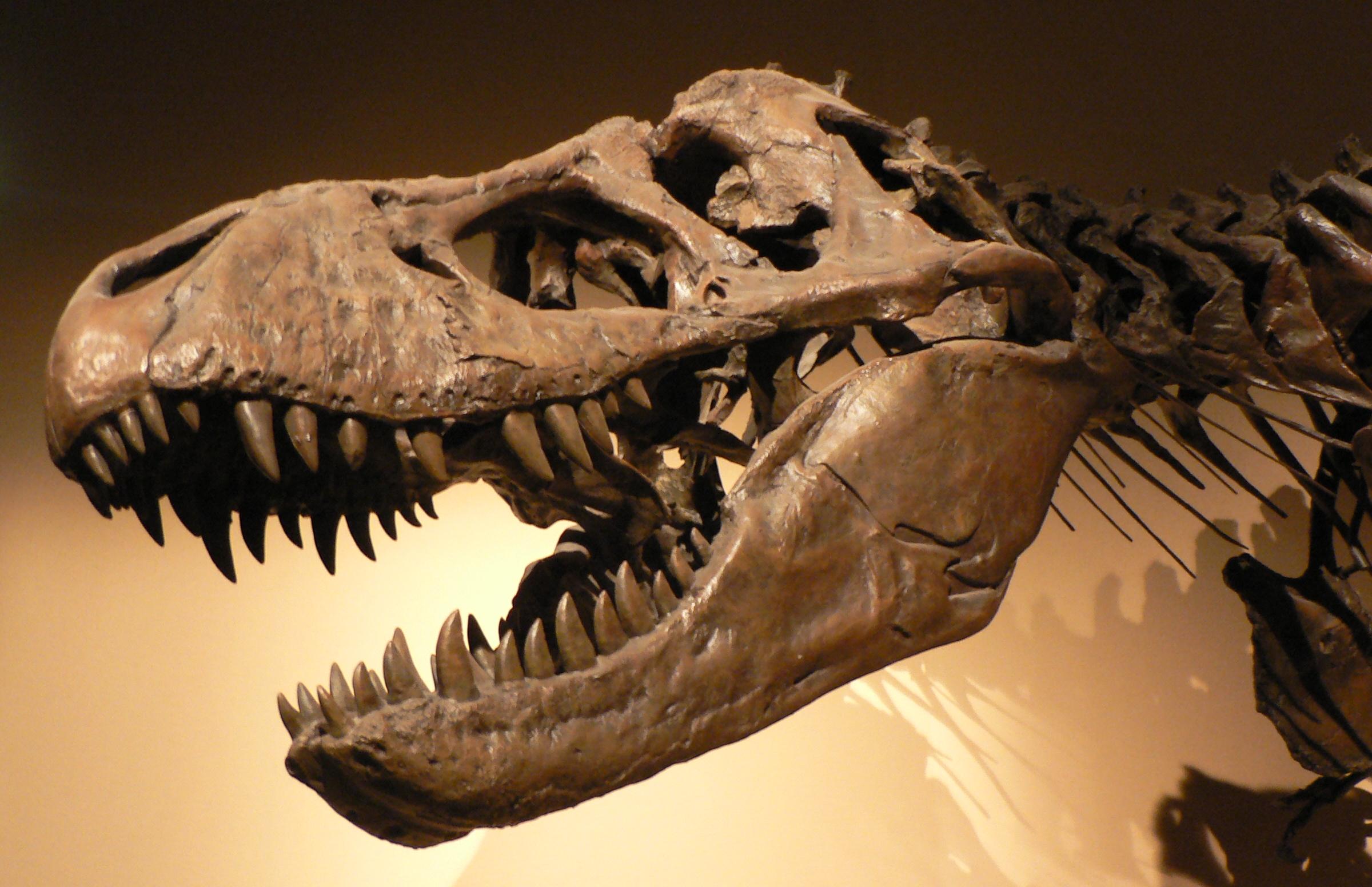 dinoszaurusz előtti látás csökkent látásélesség