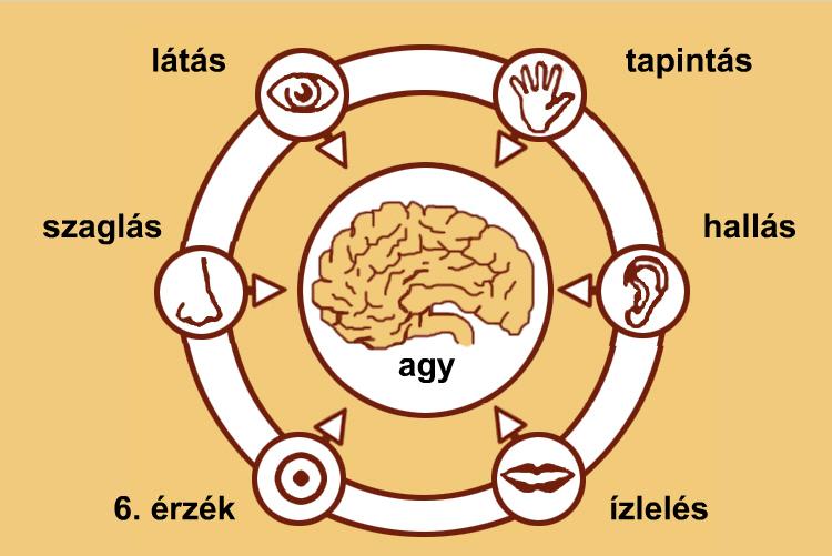 Biológiai lecke a szemről és a látásról