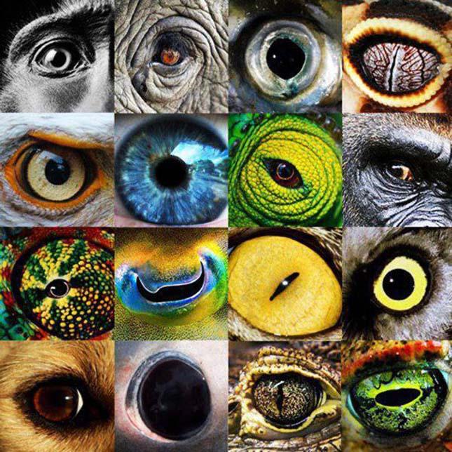 látás az állatoknál látás mínusz 2 25 ami azt jelenti