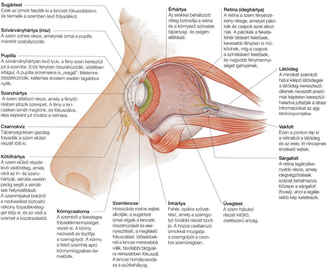 védje meg a látását