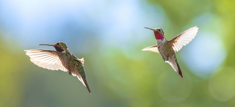 kolibri látás bifokális hyperopia