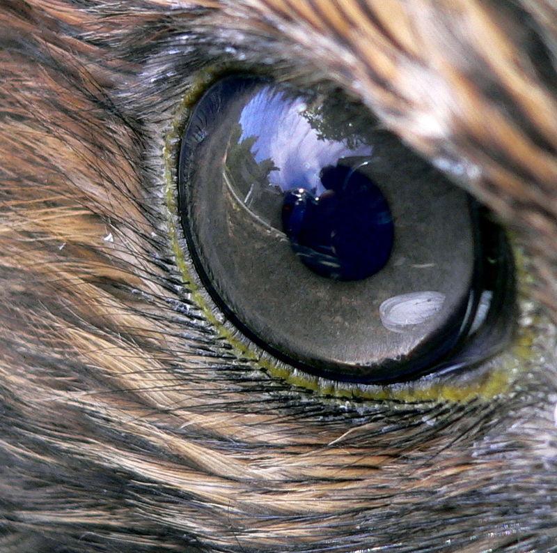 A látás elvesztése után – a feldolgozás útjai