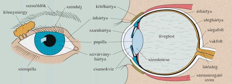 lézeres látásjavulás