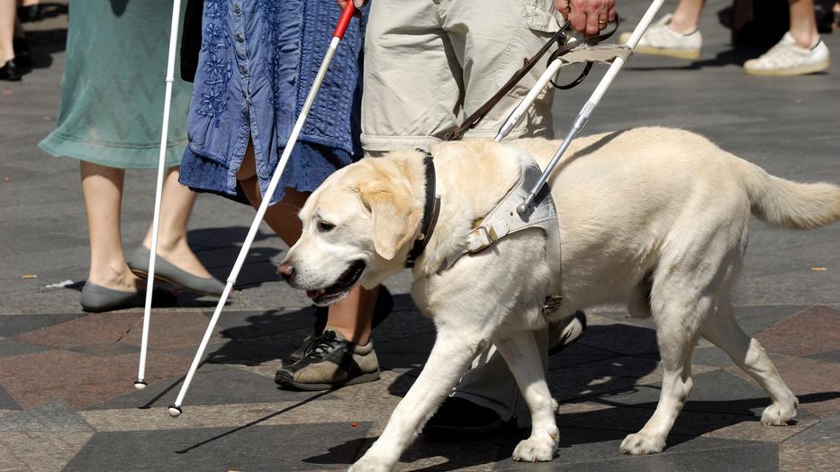 látássérült betegség a látás hiánya a bal szemben