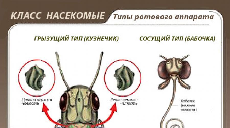 A háziméh érzékelése – Wikipédia