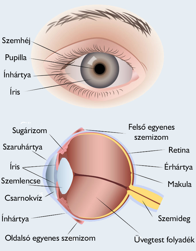 Az egyik szem élesen romlott