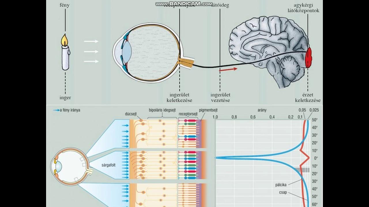 myopia torna a látás helyreállításához technika a látásgyakorlás javítására