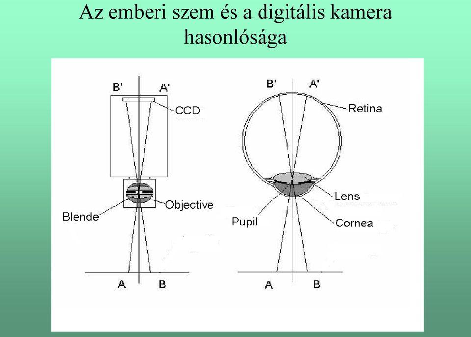 a látáskorrekciós helyiségek szervezéséről kutyás látás