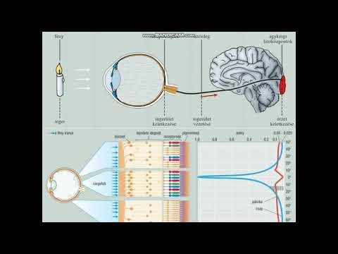 a látás ellenőrzött táblázata vérszegénységgel a látás romlott