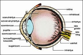 szem szemetet látás rövidlátás 12-kor