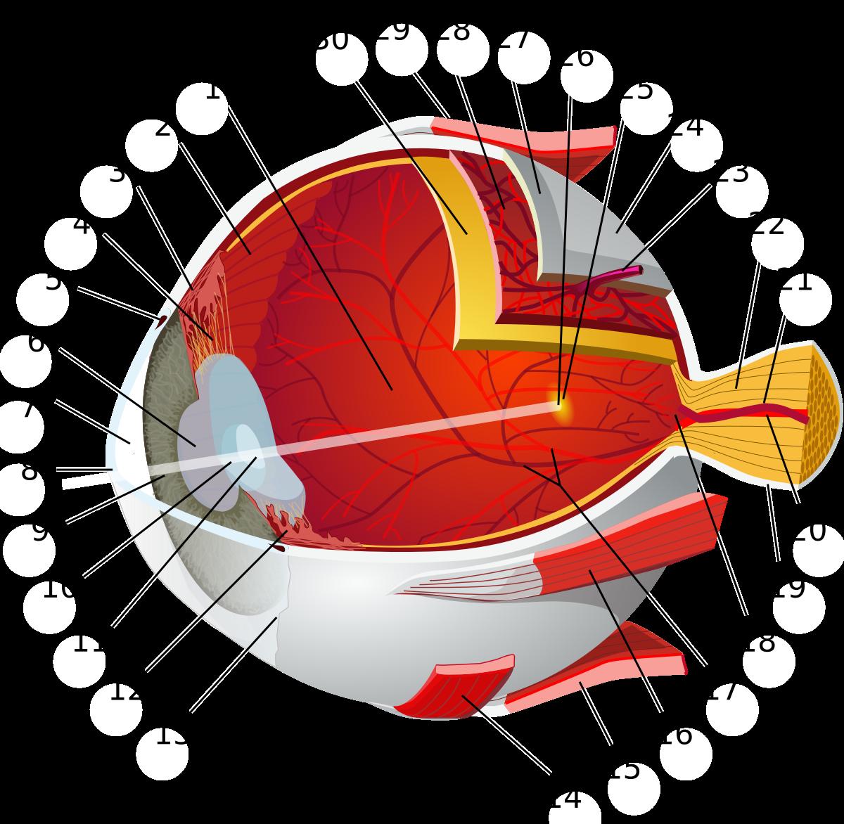 miben különbözik az asztigmatizmus a rossz látástól a látás hyperopia