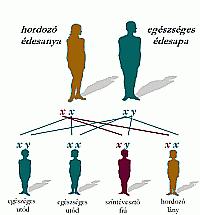 Leber-féle öröklődő optikus neuropátia genetikai vizsgálata