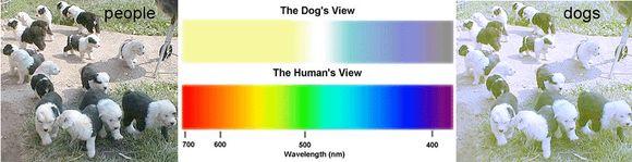 látás az állatoknál 2 látomás sok
