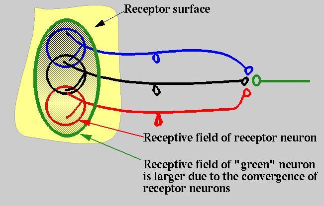 színvakság és hyperopia myopia gyakorlatok a Bates módszer szerint