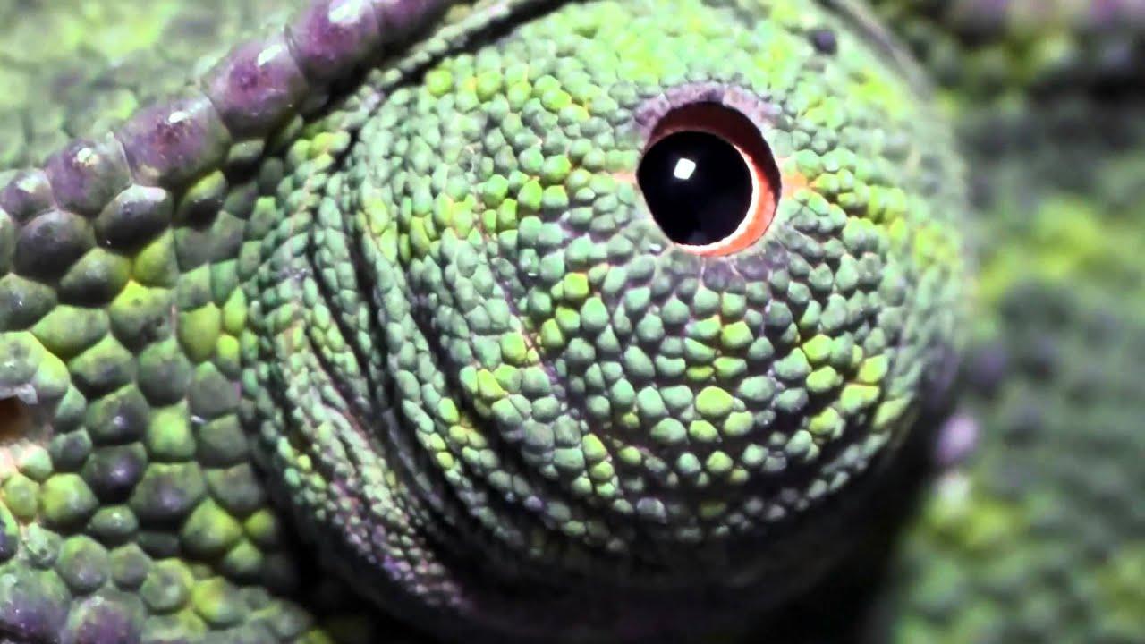 látás az állatoknál gyakorlatok a látóképesség helyreállítására