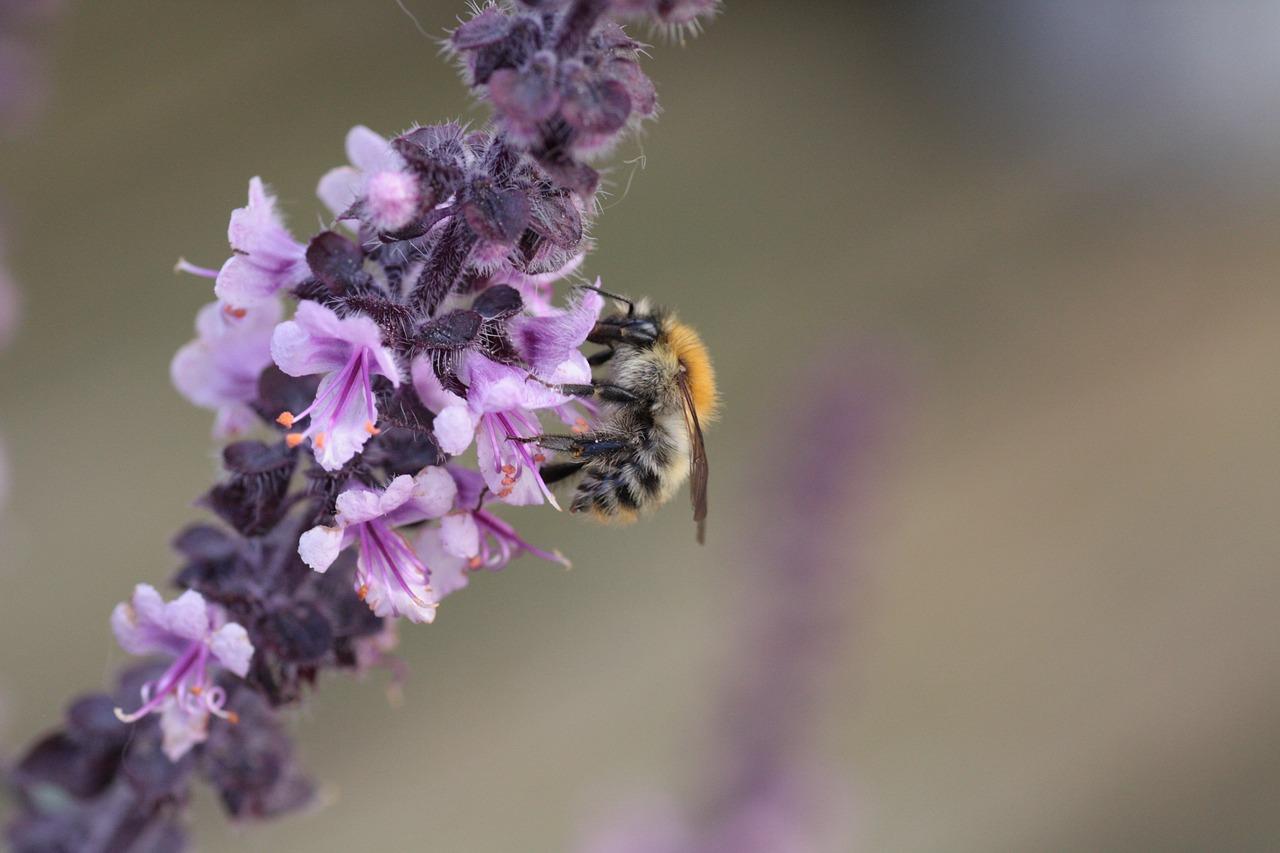 méh perga a látásért hogyan kell inni a lenmagot a látáshoz