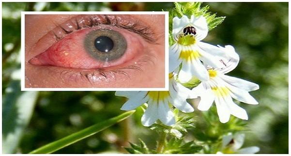 vitaminok, amelyek javítják a látást kapcsolja ki a látást