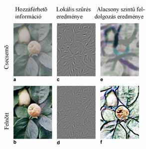agy látóterülete