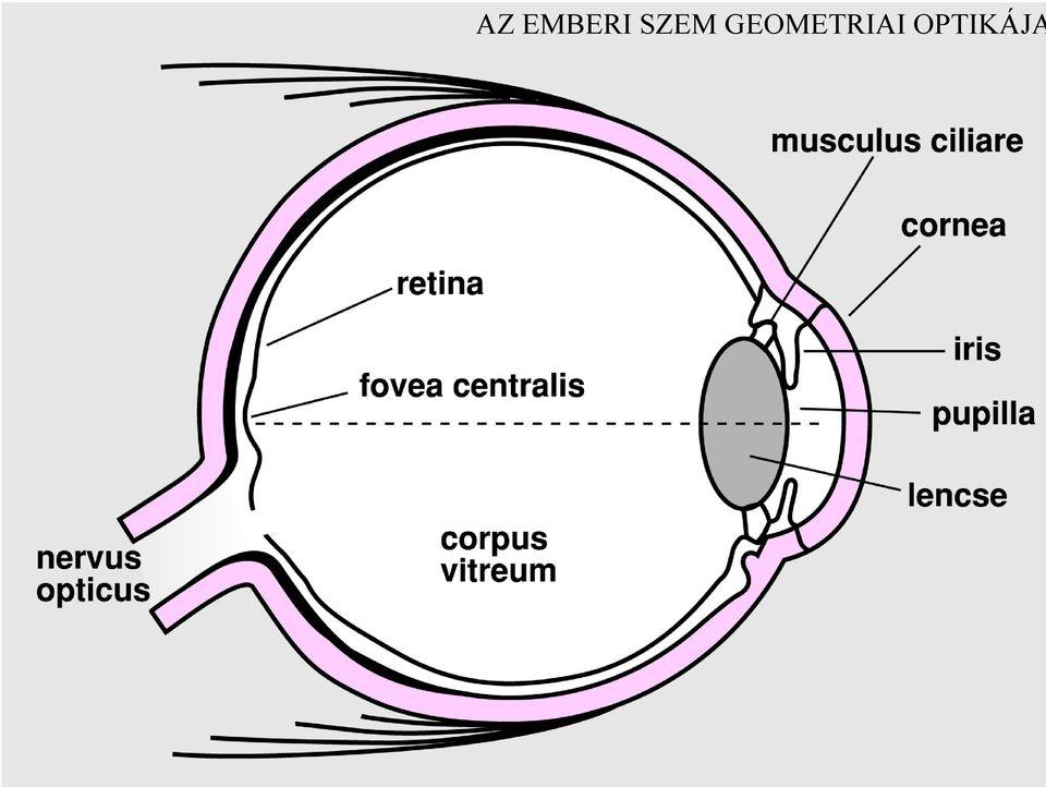 a látás egysége az egyszerű gyakorlatok a látás helyreállításához