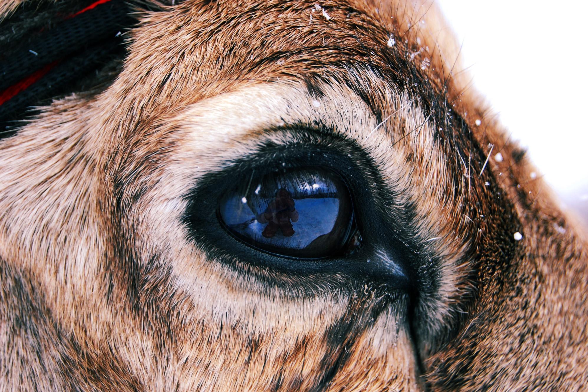Villám a szemekben: miért keletkezik, és hogyan kell kezelni - Diagnosztika