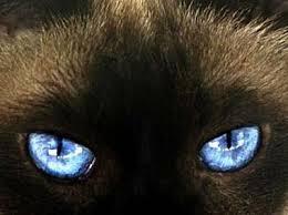 a látás jellemzője a látás helyreállítása asztigmatizmussal
